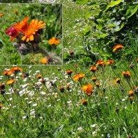 в саду :: Heinz Thorns