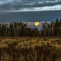 Сижу среди ночи при полной луне, не спится… не спится… не спиться бы мне… :: Валерий Иванович