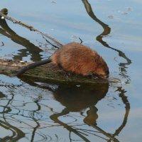 Ловись, ловись, рыбка, и большая и маленькая! :: Юрий Моченов