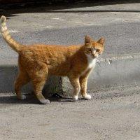 Рыжий кот - это кот-солнышко, который олицетворяет горящий очаг, тепло и уют дома :: Татьяна Смоляниченко