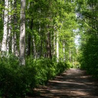 Прогулка в лесопарке :: Евгений Мухин