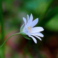 Цвет настроения- белый... :: Анна Суханова