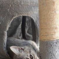 Маленький отдыхающий... :: Тамара Бедай