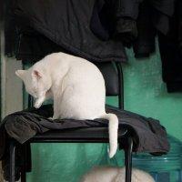 Двухэтажные коты. :: Валентина Налетова