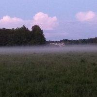 вечер в лесу :: Алексей Кузнецов