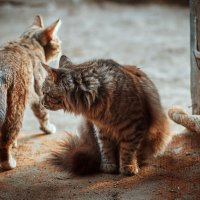 Не враги, но не друзья :: Вера Сафонова