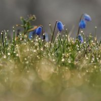 Весна пришла :: Роман Савоцкий