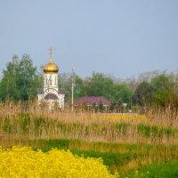 Пейзаж с рапсом :: Валерий Ткаченко