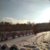 Следы на снегу :: Марина Кушнарева