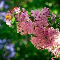 Весна в московских парках (№24) :: Absolute Zero