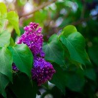 Весна в московских парках (№26) :: Absolute Zero