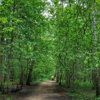 лесными дорогами :: Валентина. .