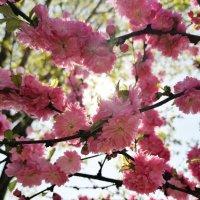 Весна прекрасное время :: Анна Семенова