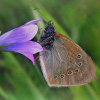 С бабочкой :: Павлова Татьяна Павлова