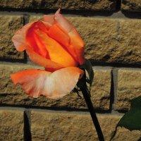 Никакая стена не страшна рождающейся красоте... :: Тамара Бедай