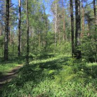 Ландыши в лесу... :: Валентина