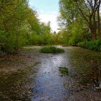 Череховецкий ручей,Бокситогорск :: Laryan1