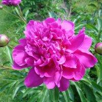 Цветок :: Наташа