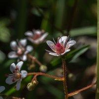 лесной букет :: PRoBoF- Feofannen