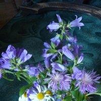 Полевые цветы, полевые цветы... :: Татьяна Юрасова