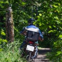 Короткой дорогой через лес... :: Владимир Безбородов