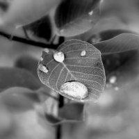 после дождя.. :: Эдвард Фогель