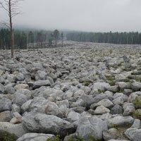 Каменная река на месте сходя селя :: Лариса Рогова
