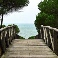 Вид на океан из парка. :: Виктор