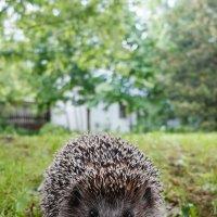 любопытный сосед :: BioJ .