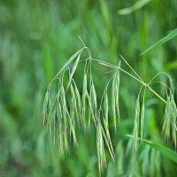 Травинки в поле :: Irene Irene