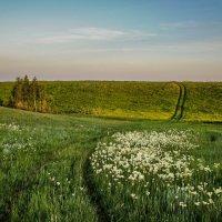 Вечер в степи :: Виктор Четошников