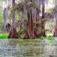 Swamp :: Al Мigdа