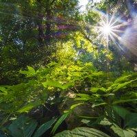 в лесу :: олег добрый