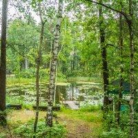 В лесу :: Ирина Фёдорова
