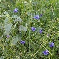 В густой траве :: Galina Solovova