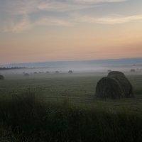 В предрассветном тумане 1 :: Galina