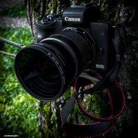 Любимый инструмент Canon M50 :: Роман Алексеев