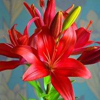 Цветы... :: Владимир Павлов