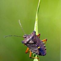 И снова насекомые :: Николай Зернов