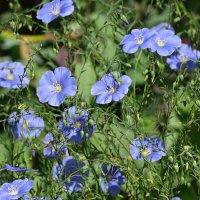 летние цветы :: Sabina