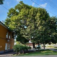 Деревья :: Николай Филоненко