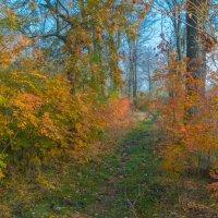 Осенний пейзаж :: Александр