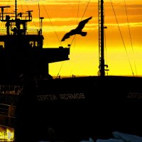 Арктические приключения. :: игорь кио