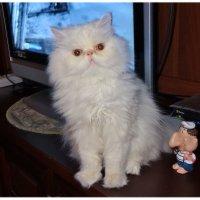 Мой кот Алекс. :: Зоя Чария