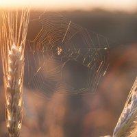 Вечер паука -1 :: Pavel Stolyar