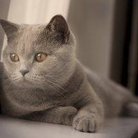 кошка :: Kirill Maltsev