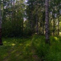 Лесные прогулки... :: Оксана Галлямова