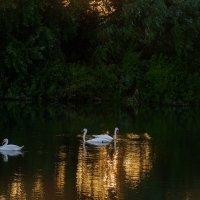 Лебединое озеро... :: Влад Никишин