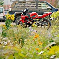Мотоцикл в кустах :: Кай-8 (Ярослав) Забелин
