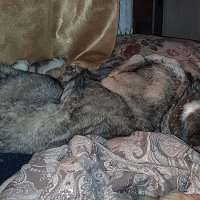 Не будите спящую собаку :: Александр Протопопов